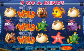 Fish Party Image